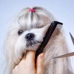 Basic pet grooming should be in every animal lover's repertoire.