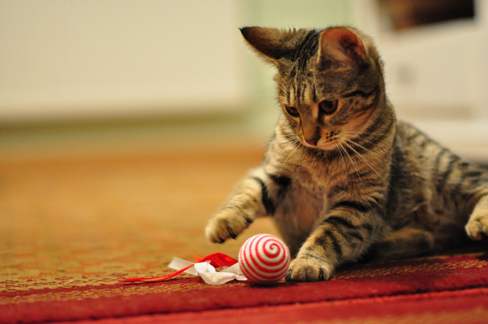 cute cat playing with high-quality cat toy