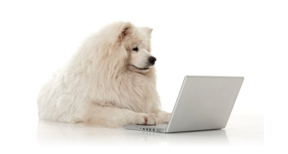 white furry dog sitting in front of a computer